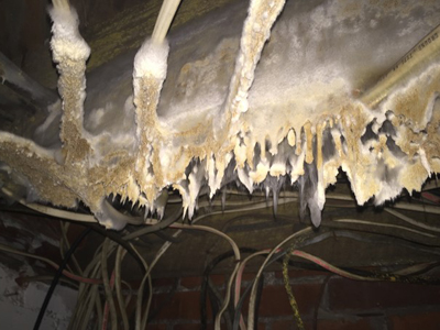 Crawl Space with Mold Damage