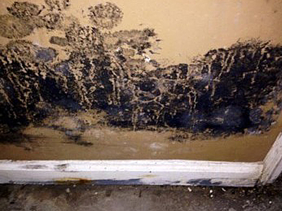 Intense Mold Damage