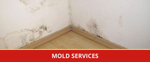 Untreated Mold